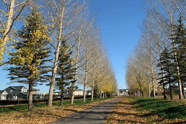 Tree lined path in the community of Creekwood Collections at Chappelle in Edmonton, Alberta.